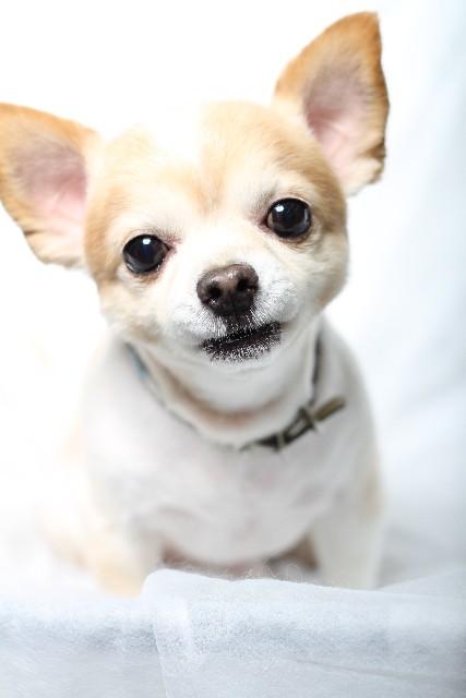 犬の分離不安とは。犬が分離不安にならないようストレスに注意しよう