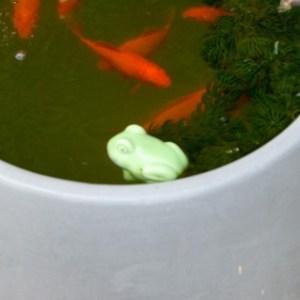 魚を飼うとき、水槽の置き場所はどこが良いか