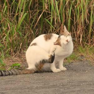 猫の耳ダニの治療法