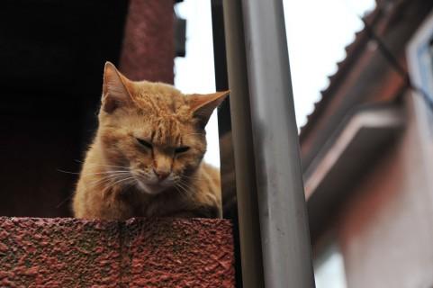 ハムスターと猫を同時に飼う時は注意が必要!猫はハムスターと仲良くならない