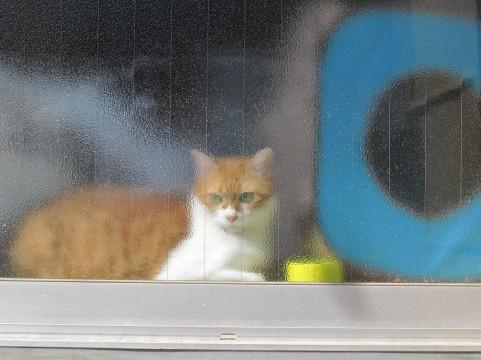 ペットホテルに猫を預ける時の注意点まとめ