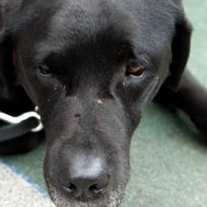 犬がストレスを溜めている際に見せる行動