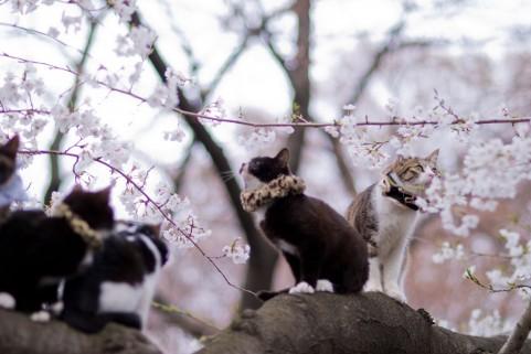 猫はなぜ集会をするの?猫が集まる理由とは
