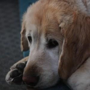 犬が血尿をしている時に考えられること