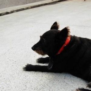 シニア犬へのドッグフードの選び方