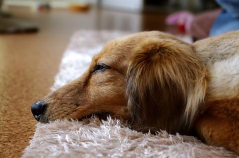 犬のマダニ予防対策方法。マダニ予防薬を活用しよう