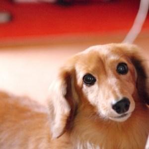 犬の鼻が乾いている時に考えられる原因