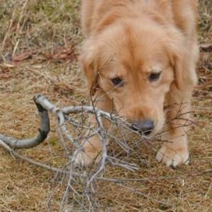 犬が地面を掘ろうとする時の心理