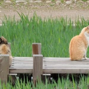 飼っている猫がうるさい時の対処法