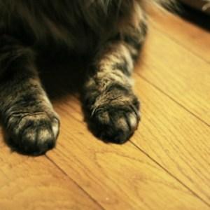 猫に壁や家具で爪とぎをさせない方法