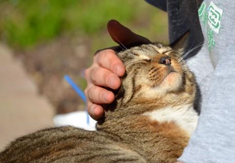 猫アレルギーの症状5つ。症状から自分が猫アレルギーかを知ろう