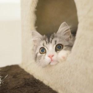 猫タワーの選び方