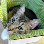 4 Places My Cats Like to Sleep … That Are Not Their Beds