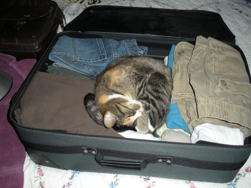 Phoebe Suitcase