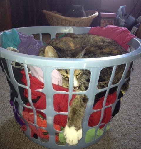 Phoebe laundry basket