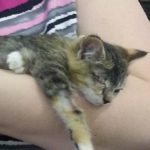 Kitten Thrown From Vehicle on Highway Finds a New Home