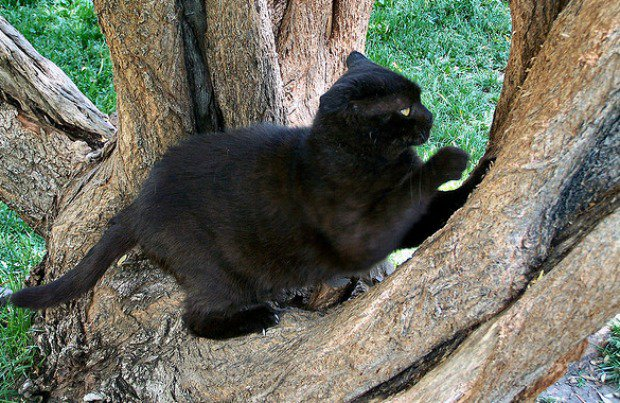 Feral_Black_Cat