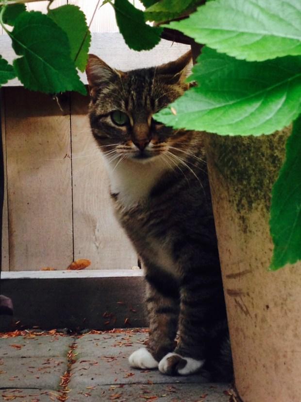 sallywilliamscat