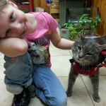 Shelter Director gives wheels and home to cat with damaged spinal cord