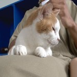 Inmates Caring for Shelter Cats While Learning Life Lessons