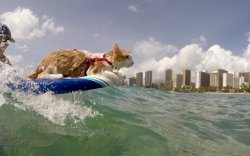 One Eyed Cat Rides the Waves in Paradise