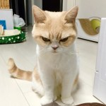 Your Cranky Cat May Have IBS:  Get the Poop on IBS