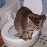 Should Cats be Toilet Trained? One Licensed Psychologist Recommends it