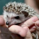 5 Things You Must Know for a  Happy Hedgehog