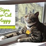 5 Signs Your Cat is Happy