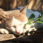 7 TIPS FOR CAT SUNBURN PAIN