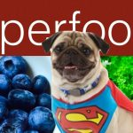What are Super Foods For Dogs?