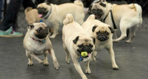 5 Things You Should Know About The Pug Life Pet Radio Magazine