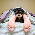 Should My Dog Be Allowed to Sleep With Me?
