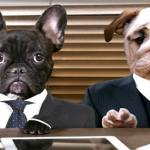 Podcast- The Dog Lawyer is on a Mission