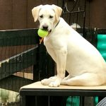 Podcast- Puppy Personality Test and Training Aid