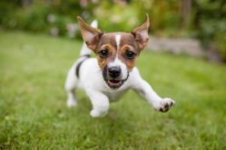 5 Fun Facts About Your Dog's Ears