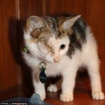 Kitten With Four Ears and Deformed Eye Rescued