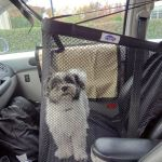 Podcast- How to Keep Your Dog Safe While Driving