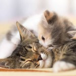 Podcast: The Creation of a Multi-level Pet Rescue Network