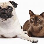 WHAT PET OWNERS NEED TO KNOW ABOUT GLANDULAR DISEASES IN OLDER DOGS AND CATS