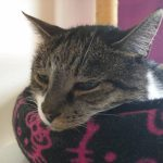 Feline Chronic Kidney Disease: What Every Cat Owner Should Know