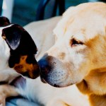 Introducing a New Dog to Your Family Dog Safely