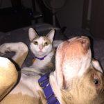 Podcast: Jericho the 80 pound service dog and the 2 pound kitten