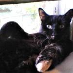 Why I love adopting senior cats