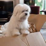 Tips for Helping Anxious Dogs and Cats Transition to a New Home