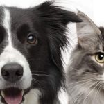 Top Five Visual Signs of Health in your Pet