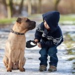 Amazing Tips on How to Make Your Dog and Kids Comfortable Together