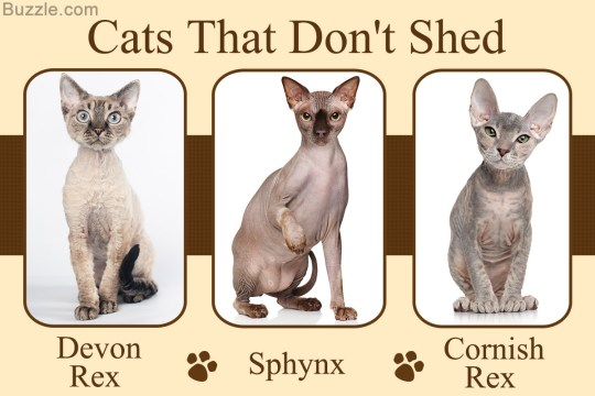 cats that do not shed