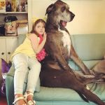 Meet Freddy the Biggest Dog in the World!