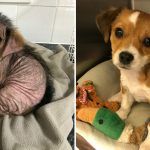 A Rescued Puppy's Amazing Transformation